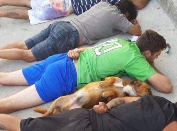 perro se rinde con sus duenos