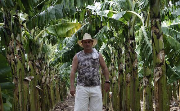 Empresa de Semillas de Villa Clara. Foto: Ismael Francisco/Cubadebate.