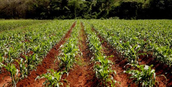 Empresa de Semillas de Cienfuegos. Foto: Ismael Francisco/Cubadebate.