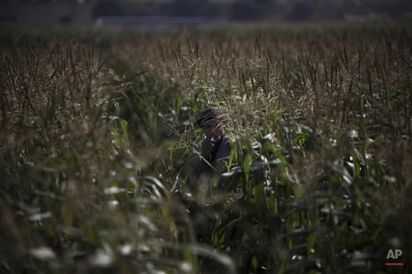 Un agricultor palestino se toma un descanso para fumar un cigarrillo mientras cosecha de maíz en Jabaliya, norte de la Franja de Gaza, 12 de mayo de 2010. (Foto AP / Tara Todras-Whitehill)