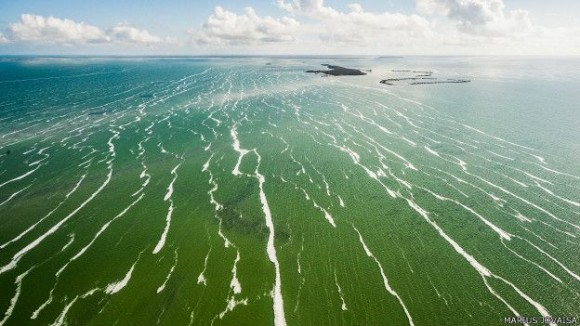 Los corales de Jardines del Rey (en la costa norte) son una atracción para submarinistas que visitan la isla. Foto: Marius Jovaiša.
