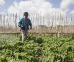 En Cuba existe  disponibilidad de tierras y personal suficiente para aumentar la producción y los volúmenes de alimentos destinados a la población Foto: FAO.