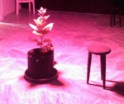 Planta de tabaco expuesta a una terapia musical de rock en el Laboratorio expuesto en el Centro Wilfredo Lam. Foto del autor.