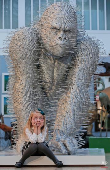 """Una chica se sienta bajo una instalación de arte que representa a un gorila titulado 'Silver Back' por el artista David Mach, mientras posa para los fotógrafos durante una presentación a la prensa de una subasta temática que cuenta con el animal como fuente de inspiración artística, titulado 'criaturas grandes y pequeñas """", en Londres, Lunes, 15 de diciembre de 2014. El de dos metros de altura por el gorila Premio Turner nominado artista es el tercero de una edición de tres, el primero de los cuales tiene el récord mundial Guinness para la instalación de arte más grande hecho totalmente de abrigo perchas. La venta prevista para el 17 de diciembre 2014, explora los animales a través de una amplia gama de medios y estilos, desde los detalles intrincados de talla en los muebles del siglo 19 a través de la escultura contemporánea, según Christieís casa de subastas. (Foto AP / Lefteris Pitarakis)"""