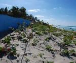 La Mesa Redonda abordará la importancia de las costas para el país, el ordenamiento y las regulaciones en las zonas de playas.
