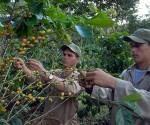 Agricultura cubana-JR