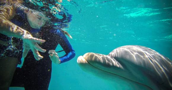 Javier González toca un delfín durante una sesión de terapia. Foto: Adalberto Roque/ AFP.