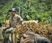 Campesino sobre una carreta en Calabazas de Sagua, comunidad montañosa del Plan Turquino enclavada en el municipio de Sagua de Tánamo, provincia de Holguín. Cuba, el 12 de junio de 2015. AIN FOTO/Juan Pablo CARRERAS