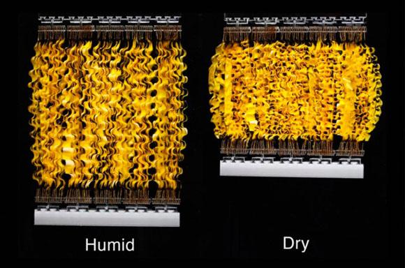 El movimiento de esporas puede transformarse en energía.
