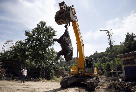Una excavadora retira el cadáver de un oso en el zoológico en Tbilisi (Georgia) muerto tras las fuertes lluvias caídas en la zona. Las inundaciones, que se cobraron 17 muertos según los últimos datos ofrecidos por las autoridades, arrasaron el zoológico. Dejaron en libertad a decenas de animales, osos, leones, tigres, e incluso, cocodrilos. Casi la totalidad fueron capturadas o abatidas. Foto: Reuters.