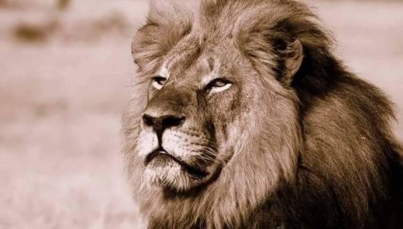El cazador que abatió al león Cecil, el felino más querido de Zimbaue, tras pagar 50 mil euros ha sido identificado como un dentista estadounidense que responde al nombre de Walter Palmer y reside en Minneapolis.