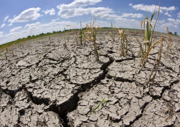 La pérdida de semillas tendrá influencia directa en temporada de cultivo. Foto: EFE.