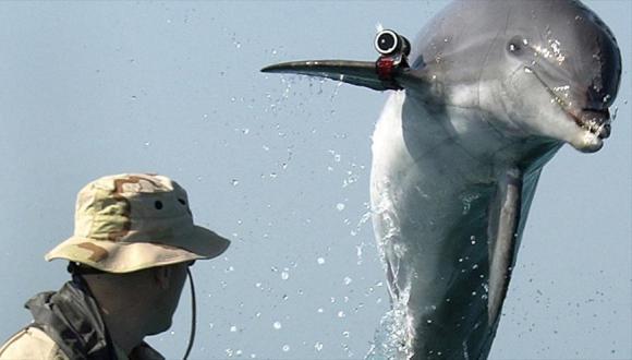 Delfin Hamas