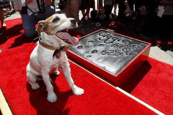 """Uggie, el energético Jack Russell terrier que cautivó corazones cuando apareció en la película muda ganadora de varios Oscar """"The Artist"""", ha muerto en Los Ángeles a los 13 años de edad. Foto: Reuters"""