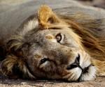 India Last Lions