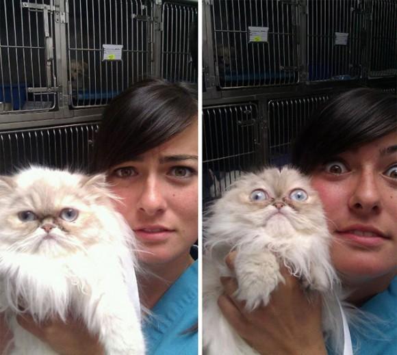 Así reaccionaron estos al acudir al veterinario. Foto: BoredPanda