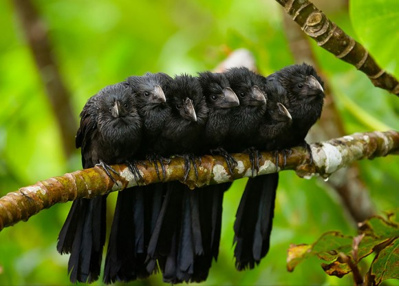 birds-keep-warm-bird-huddles-12__880