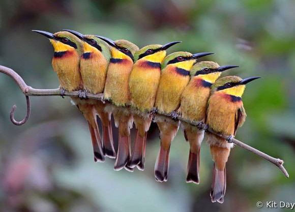 birds-keep-warm-bird-huddles-15__880