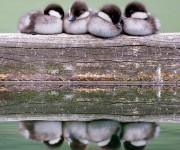 birds-keep-warm-bird-huddles-22__880