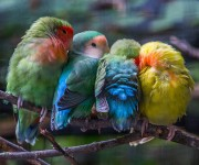 birds-keep-warm-bird-huddles-23__880