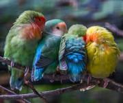 birds-keep-warm-bird-huddles-23__880