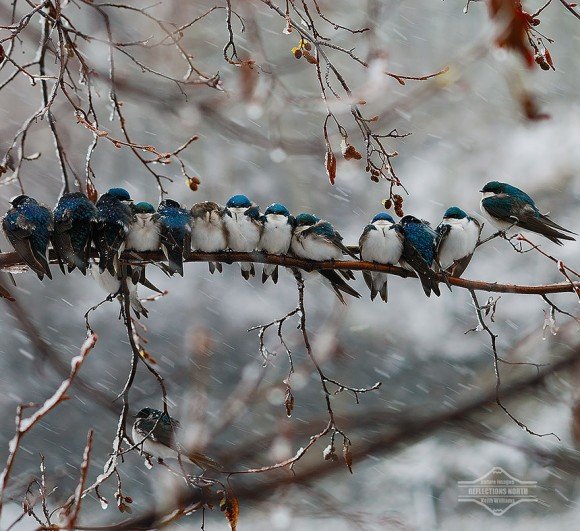 birds-keep-warm-bird-huddles-3__880