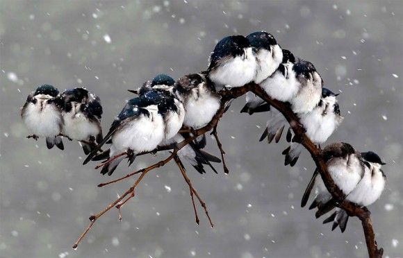 birds-keep-warm-bird-huddles-4__880