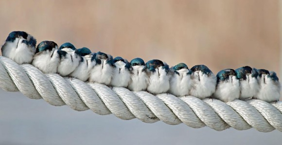 birds-keep-warm-bird-huddles-9__880