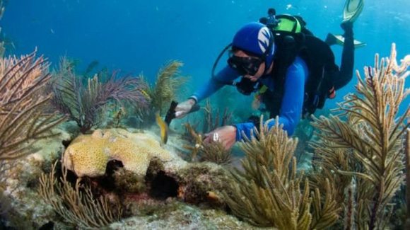 Asumen iniciativa de conservación marina Cuba y EE.UU.