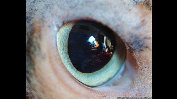 Los gatos ven el mundo en colores apagados, lo cual les facilita ver el movimiento sin distracciones. Foto: El ojo de Raja el gato. Andrew Marttila/REX