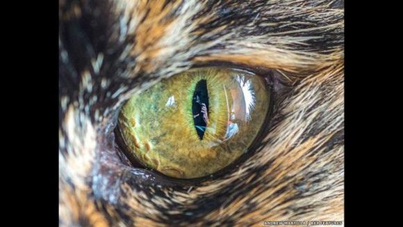"""""""Para lograr que un gato mire hacia el lente, a menudo uso algún tipo de distracción con sonido o un objeto. Foto: El ojo de Lady la gata. Andrew Martila/REX"""