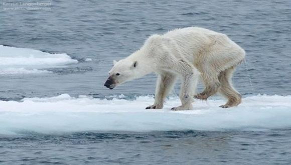 Todo un alegato para cuidar el planeta.