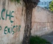 Toda una cuadra de laureles ha sido emparedada con cemento. Foto:Susana Tesoro/Cubadebate