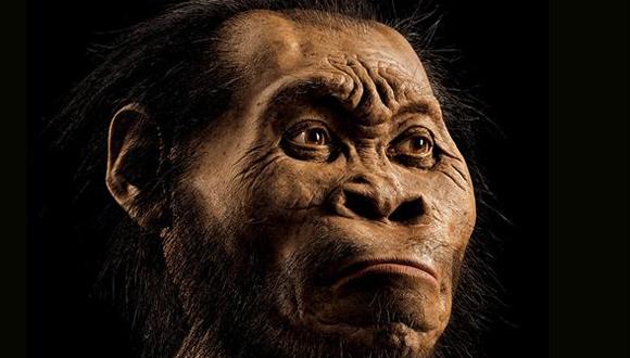 Así debería haber sido el rostro de un Homo Naledi. Foto: AP