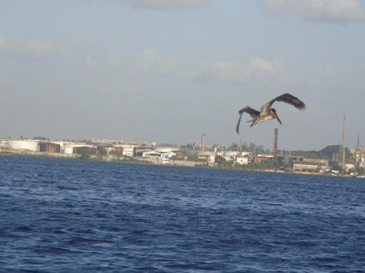 Buscando peces en la  Bahía de La Habana. Foto: Roxana Badosa