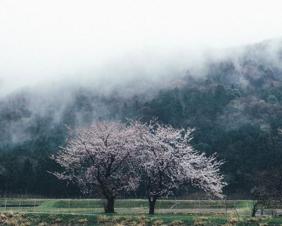 Japón (4)
