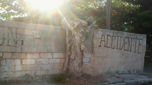 El árbol ya es leña, desde las primeras horas de la mañana el sol lo sobrepasa. Foto Susana Tesoro/ Cubadebate