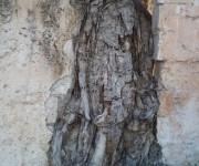 Si esta imagen fuera de un ser humano o de un animal, sería mucho más dramática, pero el árbol no se queja. Foto: Susana Tesoro/Cubadebate.