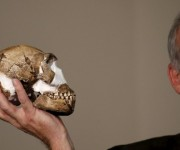Homo naledi. Foto: Reuters