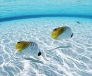 peces 1