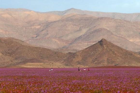 Atacama (1)