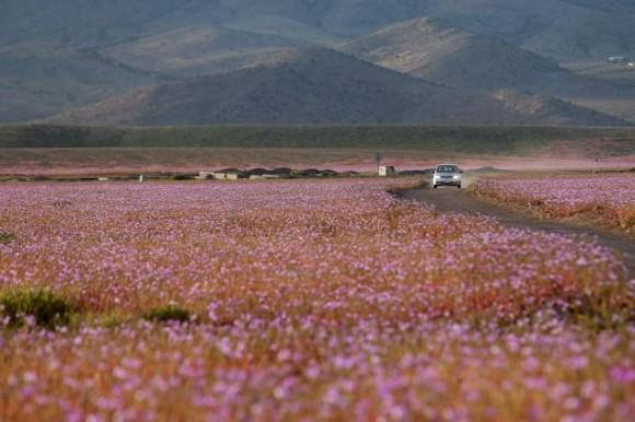 Atacama (5)