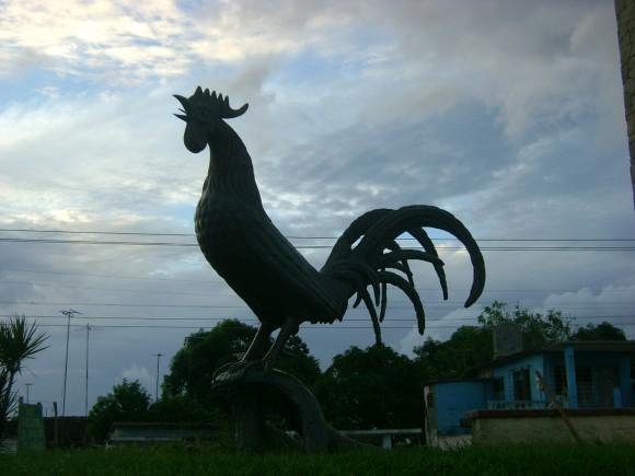 Bello despertar con el gallo de Morón. Foto Iris Moreno Rodríguez, Pinar del Río. / Cubadebate