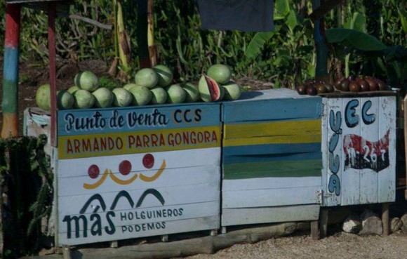 Los melones de Holguín. Foto: Ismael Francisco/ Cubadebate.
