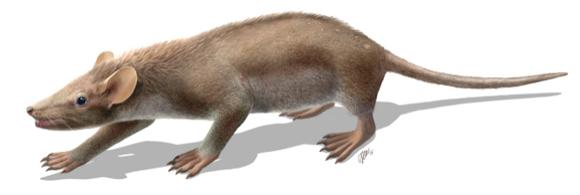 Reconstrucción del mamífero 'Spinolestes'.