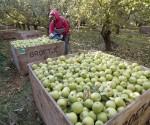 manzanas inmigrantes estados unidos
