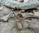 tumba soldado griego