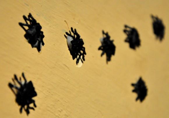Una de las muestras. Foto. Roberto Garaicoa Martínez.