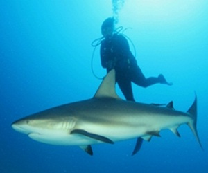 buzo_con_tiburon1
