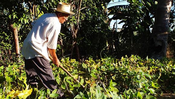 campesino labrando cosecha